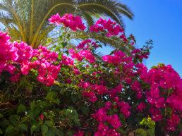 Flowers, Arizona