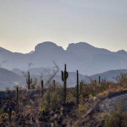 Mountains, Cactuse, Arizona