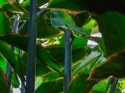 Plant, New Zealand